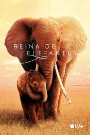 The Elephant Queen / Reina de elefantes 2019
