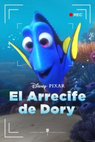 Dory's Reef Cam 2020